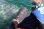 Author Geary Ritchie gets his first hand up-close with a 40' gray whale.