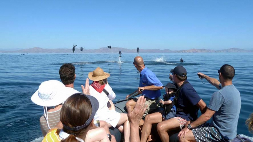 Following a pod of dolphins on the Sea of Cortez on an AdventureSmith tour