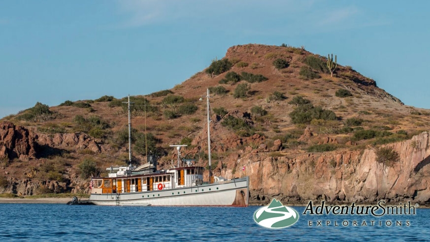 The Westward in the Sea of Cortez – Photo Wendy Shattil