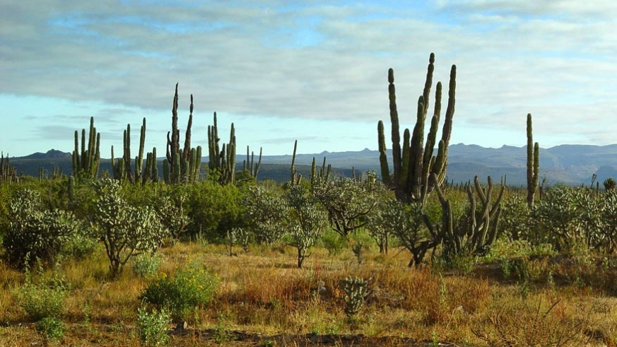The desert takes just a few days after a good soaking rain to begin to show green