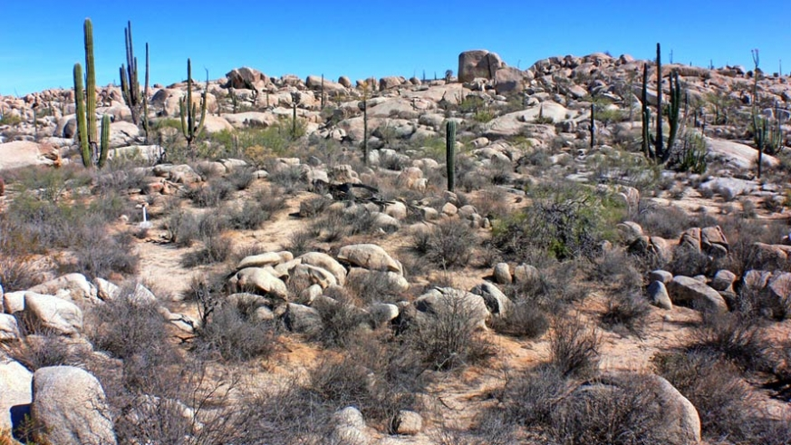 Like much of Southern California, the natural state of Baja is desert