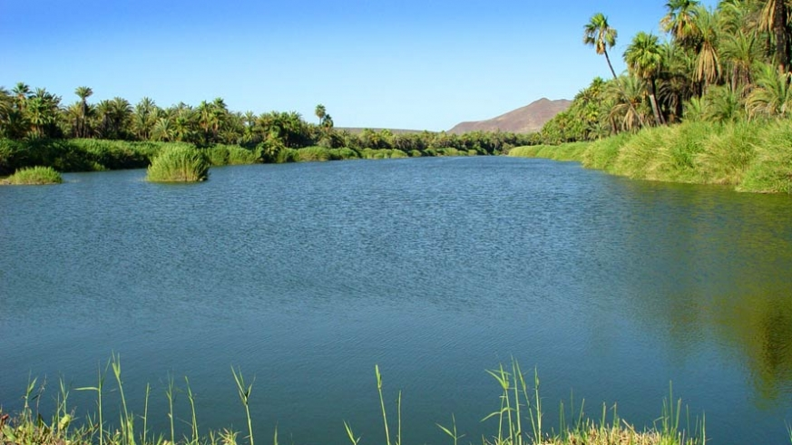 The brackish waters of the estuaries make the area one of the greenest in Baja California Sur