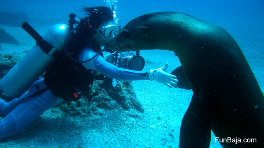 Shaking hands with a Sea Lion in the Sea of Cortez