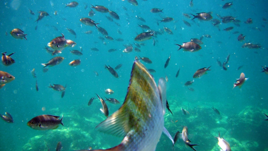 shallow water reefs teaming with life in the Sea of Cortez