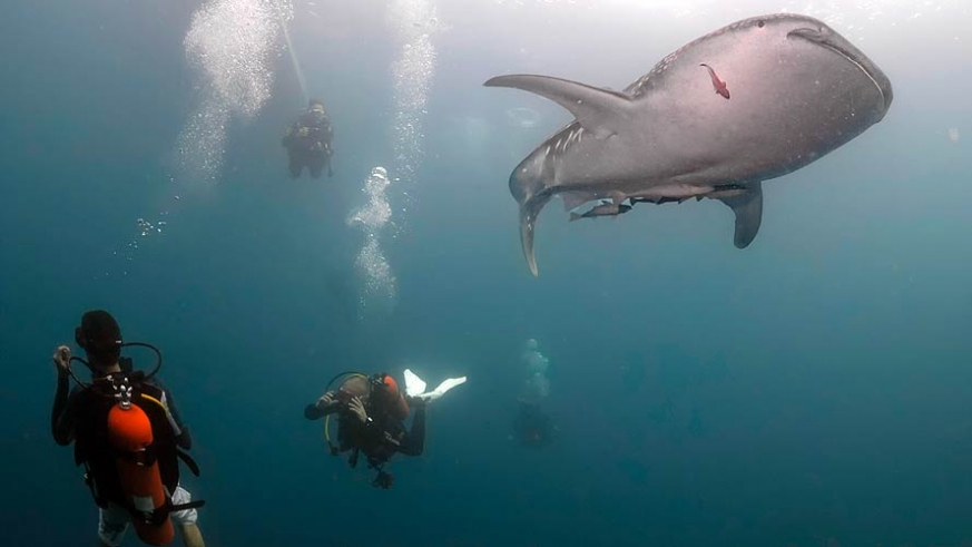 Although these gentle giants allow to you swim with them, touching their sensitive skin is discouraged.