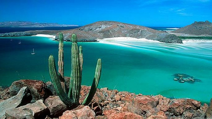 Snorkeling and sight-seeing charters are a great way to explore the wonders of the Sea